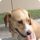 Adopt A Pet :: Padgett