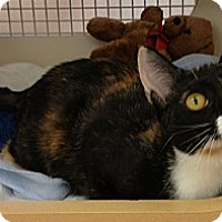 Adopt A Pet :: Jolie - Vero Beach, FL