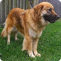 Adopt A Pet :: Fluffy - Jacksonville, FL