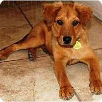 Adopt A Pet :: Perry - Gilbert, AZ