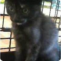 Adopt A Pet :: Rose - Jacksonville, FL