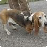 Adopt A Pet :: Candy Cane - Littleton, CO