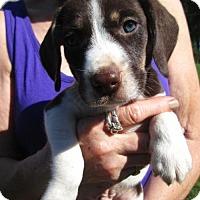 Adopt A Pet :: CLINT - Brookside, NJ