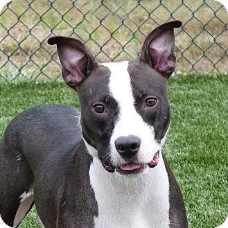 Terrier (Unknown Type, Medium) Mix Dog for adoption in Columbia, Illinois - Aggie