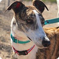 Adopt A Pet :: Goody - Tucson, AZ