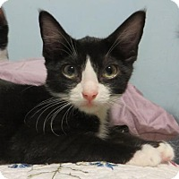 Adopt A Pet :: .Simon - Ellicott City, MD