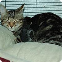 Adopt A Pet :: Flounder - Bradenton, FL