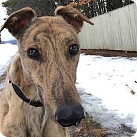 Adopt A Pet :: Tahoe - Swanzey, NH