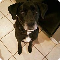 Adopt A Pet :: Hudson - Springfield, MO