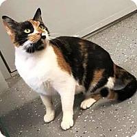 Adopt A Pet :: Stella - Kalamazoo, MI