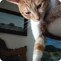 Adopt A Pet :: James - Bulverde, TX