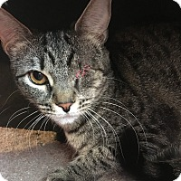Adopt A Pet :: Sweetie - Wayne, NJ