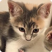 Adopt A Pet :: Nova - Mount Pleasant, SC