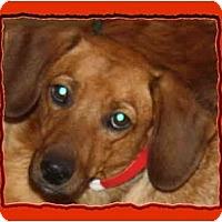 Adopt A Pet :: Spice - Toronto/Etobicoke/GTA, ON