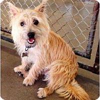 Adopt A Pet :: Barley - Winter Haven, FL