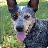 Adopt A Pet :: Cricket - Siler City, NC