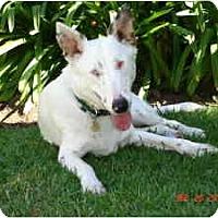 Adopt A Pet :: Mark - Mesa, AZ