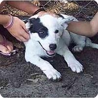 Adopt A Pet :: Dally - Groveland, FL