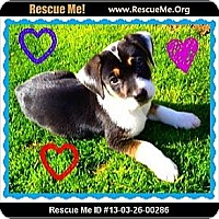 Adopt A Pet :: Danny Boy - Scottsdale, AZ