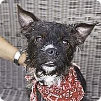 Adopt A Pet :: Junior - Vaudreuil-Dorion, QC