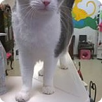 Adopt A Pet :: Rachael - Trevose, PA