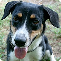 Adopt A Pet :: Cowboy - Lufkin, TX