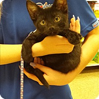 Adopt A Pet :: Paul - Scottsdale, AZ