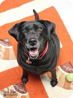 Labrador Retriever Mix Dog for adoption in Yukon, Oklahoma - Eva