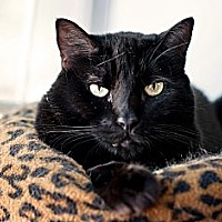 Adopt A Pet :: Winkin - Carencro, LA