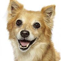 Adopt A Pet :: Zuzu - oakland park, FL