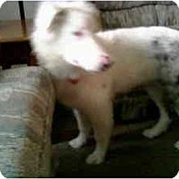Adopt A Pet :: Willow - Mesa, AZ