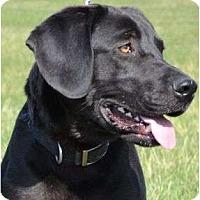 Adopt A Pet :: Rooney - Newport, VT