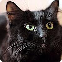 Adopt A Pet :: Josie - Alexandria, VA