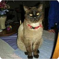 Adopt A Pet :: Louie - Washington Terrace, UT