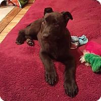Adopt A Pet :: CHERRY - Winnetka, CA