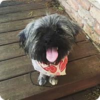Adopt A Pet :: Cooper - Homewood, AL