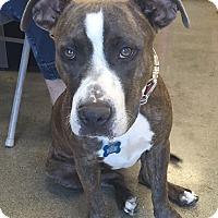 Adopt A Pet :: Roxy - Cerritos, CA