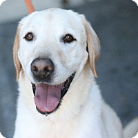 Adopt A Pet :: Derek - Canoga Park, CA