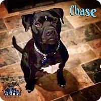 Adopt A Pet :: Chase - Jasper, GA