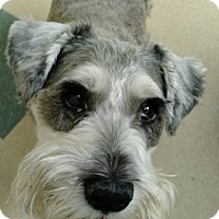 Adopt A Pet :: Riley - Matthews, NC
