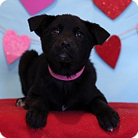 Adopt A Pet :: Xena ADOPTION PENDING - Waldorf, MD