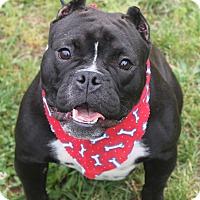 Adopt A Pet :: HIPPO - Clayton, NJ