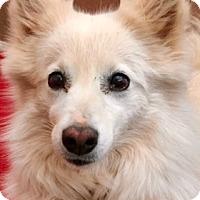 Adopt A Pet :: Ella - Chandler, AZ