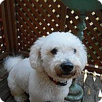 Adopt A Pet :: Bailey - Berlin, WI