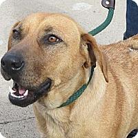 Adopt A Pet :: BELLE - Glastonbury, CT