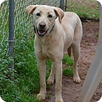 Adopt A Pet :: Elsie - Athens, GA