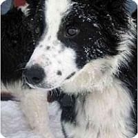 Adopt A Pet :: Kash - Glenrock, WY