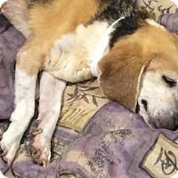 Adopt A Pet :: Emmie - Phoenix, AZ