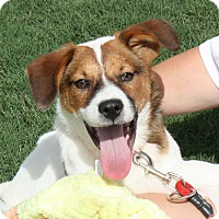Adopt A Pet :: Zack-PENDING! - Marion, AR