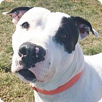 Adopt A Pet :: Duncan - Hadley, MI